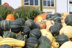 Pumpkin Patch Nj Chester by Local Apple Picking And Pumpkin Patching At Riamede Farm What U0027s
