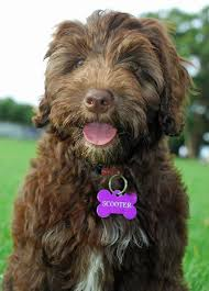 best 25 medium dog breeds ideas on pinterest medium sized dogs