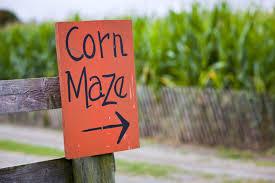 Hillcrest Farms Pumpkin Patch by Take A Trip To A Pumpkin Patch Or Corn Maze Near Daphne Alchris