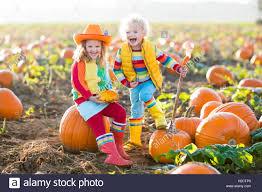 Pumpkin Picking In Ct by Little And Boy Picking Pumpkins On Halloween Pumpkin Patch