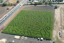 Petaluma Pumpkin Patch Corn Maze Map by Petaluma Pumpkin Patch Petalumapumpkin On Pinterest