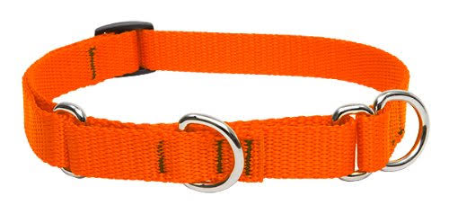 Lupinepet Martingale Combo Collar - Blaze Orange