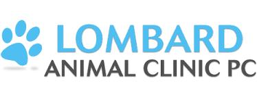 lombard animal hospital veterinary services animal hospital villa park glen ellyn