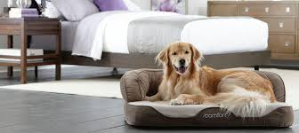 Serta Dog Beds by 2015 Serta To Use Only Certipur Us Certified Polyurethane Foam