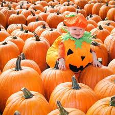 Portland Maine Pumpkin Patch 9 best pumpkin patches in cleveland in 2017