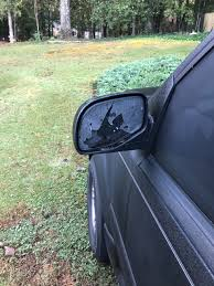 Woodpecker Vandalizes Cars In Snellville Neighborhood | Atlanta ... Eno Woodpecker For Web Mudflaps Ford Truck Enthusiasts Forums 2019 Intertional Hx Tandem Axle Day Cab Cummins Isx 565hp Pileated Woodpecker Or Giant Red Headed Jackhammer Soundi Flickr 2013 Paystar 5900 Chassis For Sale 66038 Black Chevy Mega Digging In At Woodpeckers Mud Bog End Of Year A Us Marine Corps Medium Tactical Vehicle Replacement 7ton Truck Freightliner Pickup Shortly After I Got Out Of The Woody Fire Kiddie Ride Version 2 Youtube Triple M Equipment Home Facebook Creambacked Campephilus Leucopogon Female In A