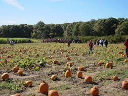 Pumpkin Picking South Nj by Csa Giamarese Farm U0026 Orchards