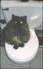 cisapride for cats what to do if your cat is constipated pethelpful