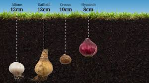 how do you plant bulbs