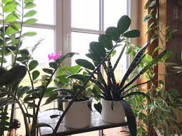 zimmerpflanzen im winter abc der winterpflege rüben