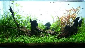 AFFABLE AQUARIUM: Aquascapes The Green Machine Aquascaping Shop Aquarium Plants Supplies Photo Collection Aquascape 219 Wallpaper F Amp 252r Of The Month October 2009 Little Hill Wallpapers Aquarium Beautify Your Home With Unique Designs Design Layout New Suitable Plants Aquariums Pinterest Pics Truly Inspired Kinds Ornamental Aquascaping Martino Agostini Timelapse Larbre En Mousse Hd Youtube Beauty Of Inside Water Garden Inspirationseekcom Grass Flowers Beautiful Background
