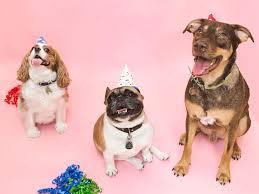Naming Vip Membership Levels Dogs 1