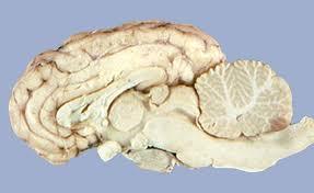 Neuroscience Laboratory 2 3