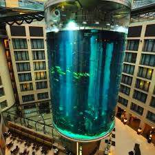 Spencers Lava Lamp Fish Tank by 134 Best Fish Tanks Images On Pinterest Fish Aquariums Fish