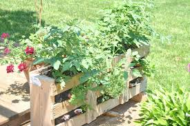 Imposing Design Pallet Garden Tomatoes On Top Herbs One Side And