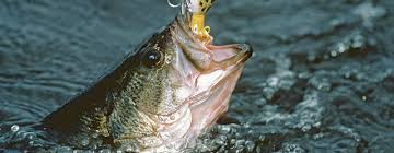 angler s guide tips on fishing for black bass in florida visit