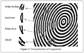 Forensic Research Characteristics Fingerprints
