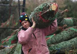 Wadsworth Ohio Christmas Tree Farm by Where To Find Fresh Christmas Trees
