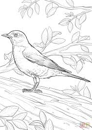 Click The American Robin Coloring Pages To View Printable