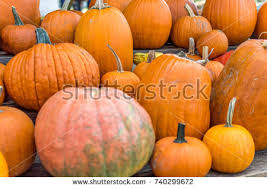 Pumpkin Patch Naples Fl by Tallahassee Fl Stock Images Royalty Free Images U0026 Vectors