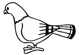 Pigeon Coloring Pages Pictures Free