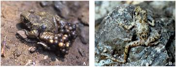 African Dwarf Frog Shedding Behavior by Diversity Free Full Text Extinction Resilience Of Island