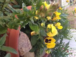 Pumpkin Patch Victorville Ca by High Desert Gardening Archives High Desert Blogging