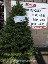 Noble Fir Fresh Cut Christmas Tree