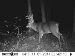 huge deer at the rack trap shed hunting has started youtube