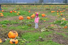 Greenbluff Pumpkin Patch Address by Schilter Family Farm U2013 Traveling The Pnw