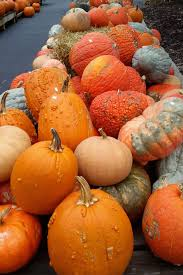 Varieties Of Pie Pumpkins by Photos Common Pumpkins Gourds For Fall Decorating Nooga Com