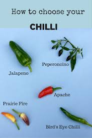 Fertilizer For Pumpkins Uk by How To Grow Chillies Easy Delicious And Money Saving The