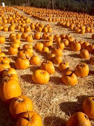 Apple Hill Pumpkin Patches Ca by 21 Best Apple Hill Camino Images On Pinterest Apples Gold And