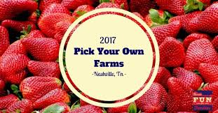 Pumpkin Patch Near Nolensville Tn by Pick Your Own Berries Fruits And Veggies In Nashville U0026 Middle Tn