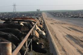 Demand for feeder cattle continues strong