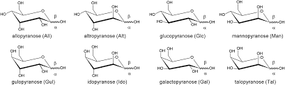 Chair Conformations In Equilibrium by Pyranose Ring Conformations In Mono And Oligosaccharides A
