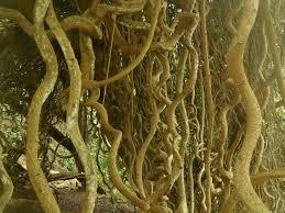 Wanderings of the old sloat McBryde Garden on Kauai