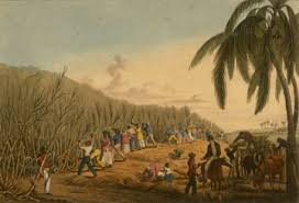 Enslaved Africans Cutting Cane In Antigua Published 1823 Image Reference NW0054 As Shown On Slaveryimagesorg Sponsored By The Virginia Foundation