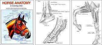Design Inspiration Horse Anatomy Coloring Book
