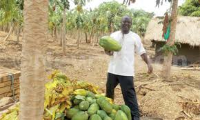 Types Of Pumpkins Grown In Uganda by I Owe My Fame To Farming