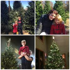 Leyland Cypress Christmas Tree by Christmas Tree Farms Only In Arkansas
