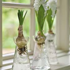 vases for forced bulbs eco friendly green products