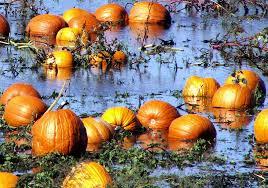 Pumpkin Patch Durham North Carolina by Tobacco Wunc