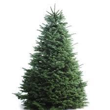 Artificial Douglas Fir Christmas Tree by Douglas Fir Christmas Tree Christmas Lights Decoration