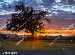 100 Corduneanu Alone Sunset Stock Photo Edit Now 727082596