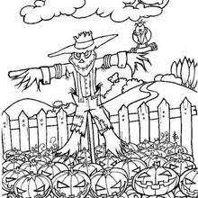 Pumpkin Patch Coloring Pages Free Printable by Scarecrow In Pumpkin Patch Coloring Pages Hellokids Com