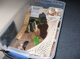 Do Hermit Crabs Shed Shell by Diy Hermit Crab Habitat I Think I Might Get One Kids Stuff