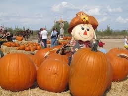 Mission Valley Pumpkin Patch by Top Pumpkin Patches In The Valley Phoenix Org