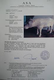 siege social point p yangling terracotta oxen