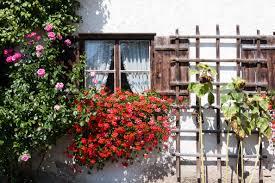Free Images Plant Wood Atmosphere Rustic Rose Cottage Garden Window Sill Flora Flowers Geranium Courtyard Shutters Sun Flower Yard